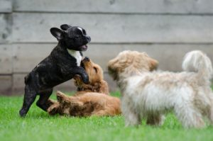 Why Socialize Your Puppy